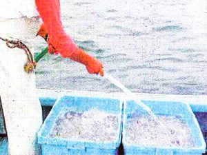 大阪府 鰮巾着網漁協様 しらす洗浄