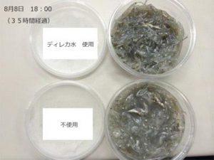 大阪府 鰮巾着網漁協様 ディレカ水の鮮度維持効果比較画像