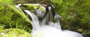 活水器で水道水から再生された水