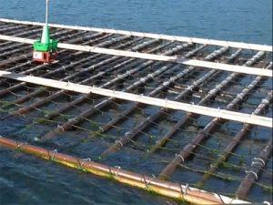 兵庫県 幸栄丸水産様 トップ画像