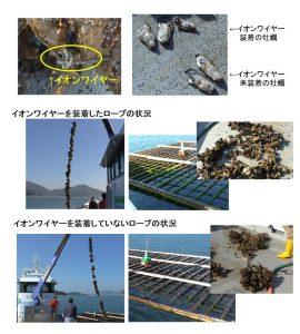兵庫県 幸栄丸水産様 イオンワイヤー使用による牡蠣養殖テスト