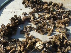兵庫県 幸栄丸水産様 牡蠣