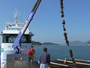 兵庫県 幸栄丸水産様 ロープ引き上げの様子