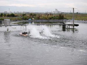 滋賀県 鳥塚様 養魚場