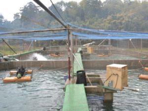 鹿児島県 立石養鰻様 いけす
