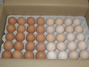 北海道 石川養鶏場様 卵