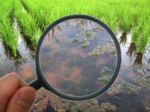 活水器ディレカの水で働きが活発になった微生物。